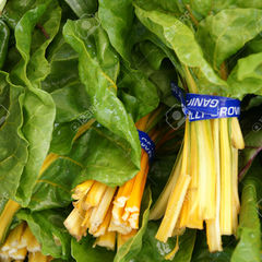 Beta vulgaris golden chard